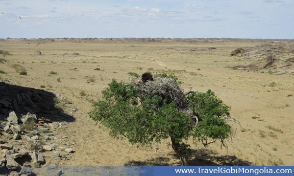 vulture nest in Ikh Nart Nature Reserve