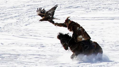 a kazakh man is riding his horse while he holding his eagle in the right arm