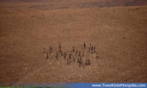 deers at Lkhachinvandad Mountain