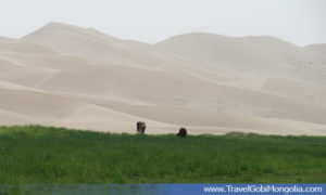 view of oasis part of Khongor Sand Dune