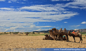 few camels are in Elsen Tasarkhai Sands