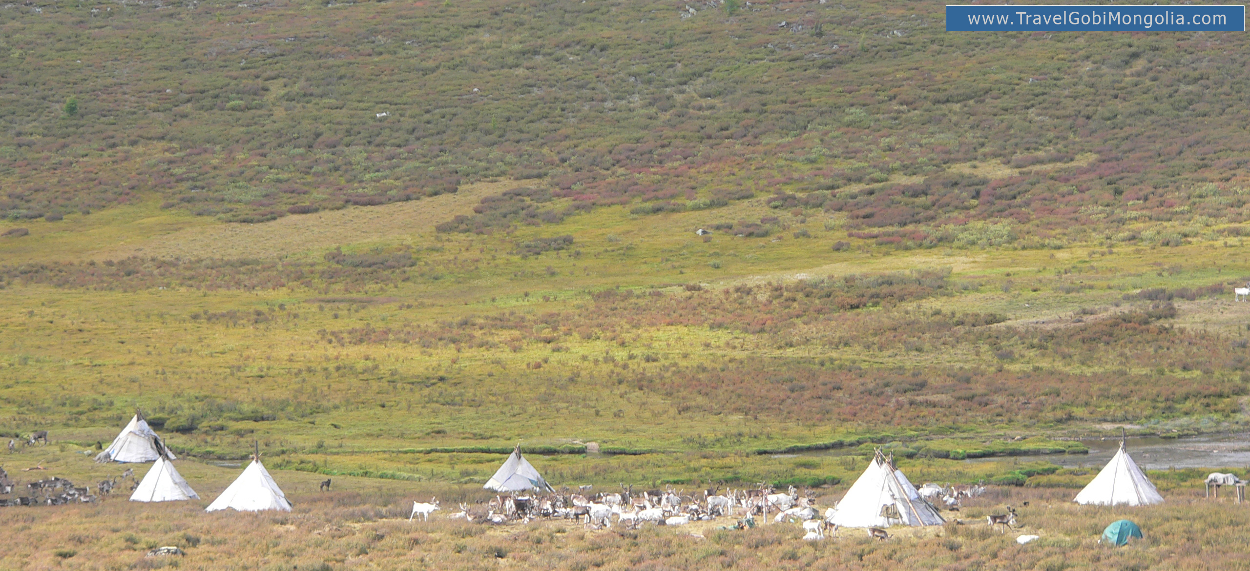 a reindeer tribe